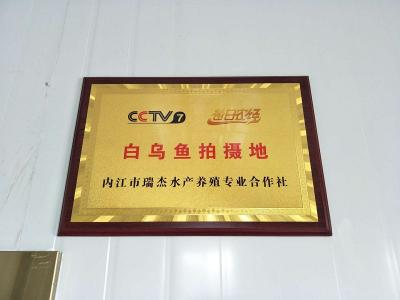 CCTV7每日农经白热博体育下载拍摄地