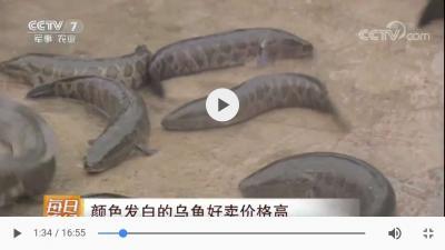 CCTV每日农经 白热博体育下载专题报道视频